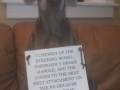 dog-shaming-yetta-b7710e976232123f274a7cd78dbc057bb2eeae5c