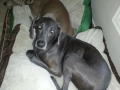 pair-of-weims-22a246dc26b1d35c514f7699c0acf316991fc72e